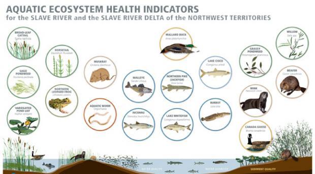 Aquatic Ecosystem health indicators